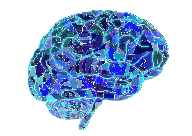 Brain Plasticity - A chain link fence - Human brain