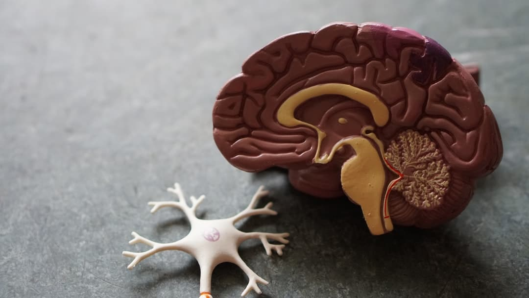 Biochemistry of the Brain - A close up of a toy - Guillain–Barré syndrome