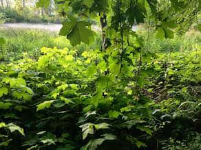 Health and Nature - A green plant in a forest - Vegetation